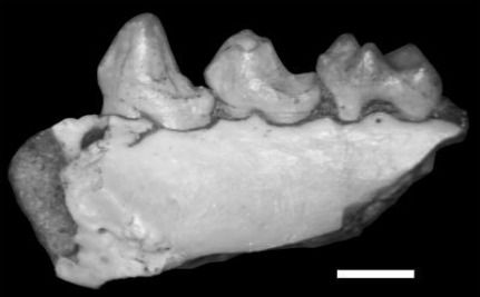Scientists Find Previously Undiscovered Primate Fossil In Texas