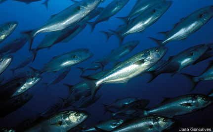 Overfishing 101: Why Ending Overfishing Pays Off in the Long Run