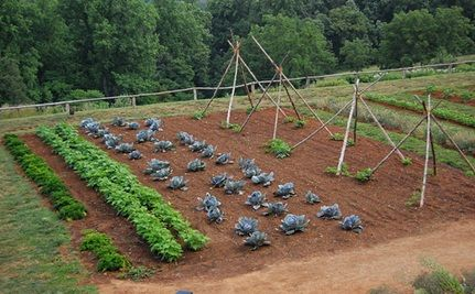 The Rising Popularity of Vegetable Gardens