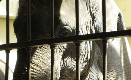 Get Ready for an International Day of Action for Elephants in Zoos