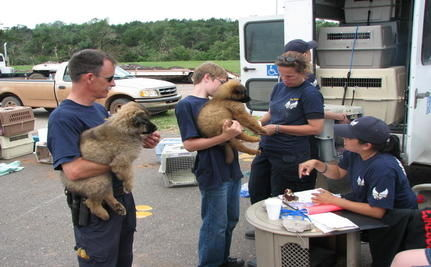 Rescue Groups Aid Animal Tornado Victims