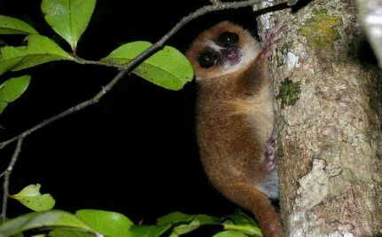 600 New Species in Madagascar Are Already Threatened (VIDEO)