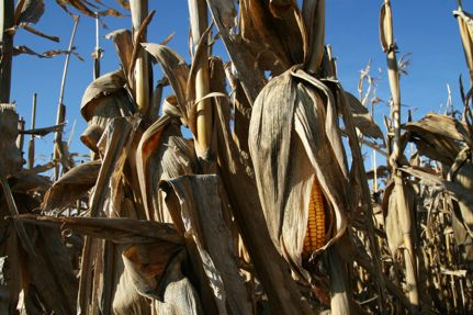 Huntsman Skips Iowa Because Of Ethanol?