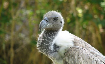 Vultures Are Worth Saving