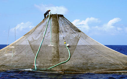 NOAA OKs Factory Fish Farming for the Gulf of Mexico