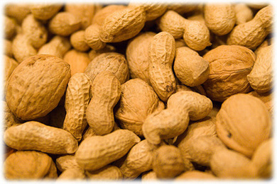 Allergies in Kids: Hold the Peanut Butter But Pets Are OK