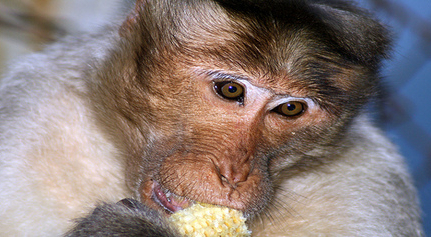 Iran Plans To Launch Monkey Into Space