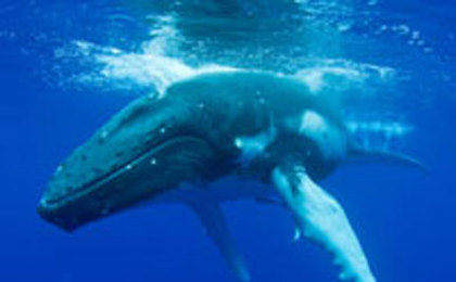 Save the Kimberley and the Humpback Whales