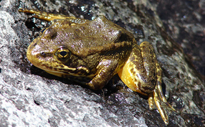 Federal Judge Acts To Protect 40 Endangered Species