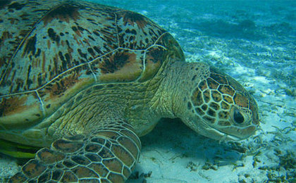 Long, Slow Death of a Sea Turtle