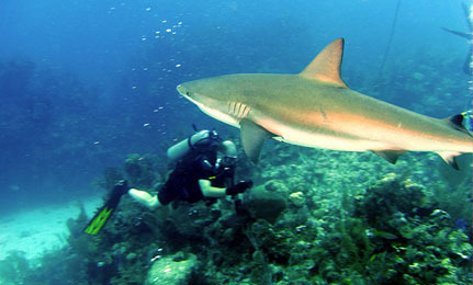 Success! Commercial Shark Fishing Banned in the Bahamas
