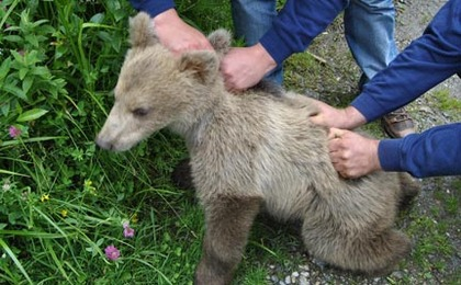 "Baby Bear ""Lucky"" Rescued by FOUR PAWS; Arrives at Orphanage"