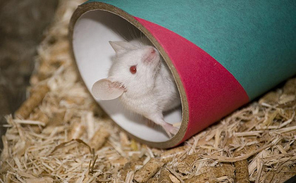 Animal Experiments Increase In Labs