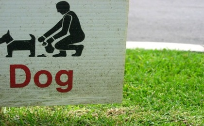 The Cool Way To Clean Up After Your Dog [Video]