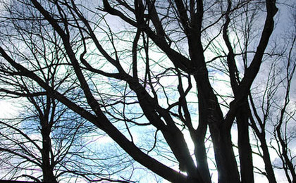 New Herbicide Linked to Thousands of Tree Deaths
