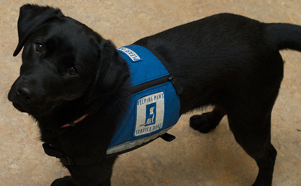 The Love Of A Good Dog: Service Dogs for PTSD