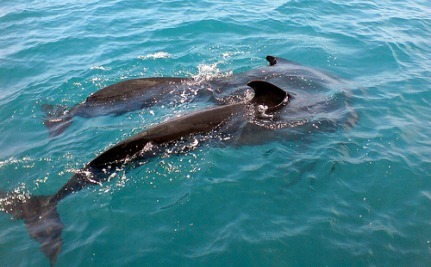 44 Stranded Pilot Whales Rescued But Many Die