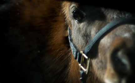 Lethal Horse Virus Jumps Species, Detected in Dog
