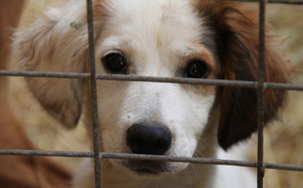 Proposed Bill Could Weaken Wisconsin's Puppy Mill Laws