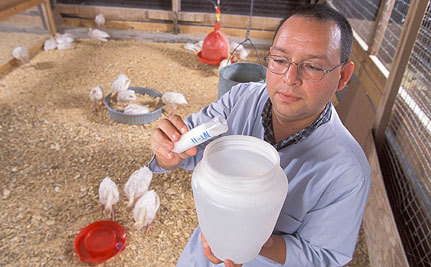 Drug-Resistant Salmonella in Ground Turkey