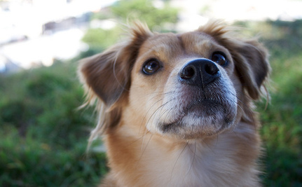 Chinese City Cancels Plan to Euthanize Dogs