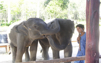 Help Release Baby Elephants Paloh and Jeli To Sanctuary