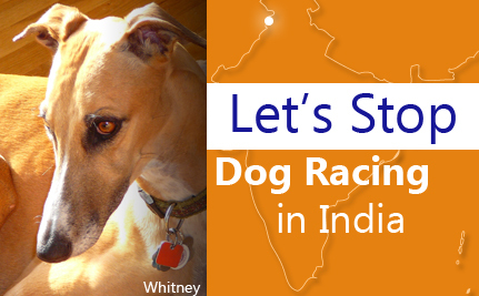 Let's Stop Dog Racing in India