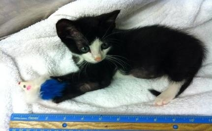 Dexter The Abused Kitten Dies From Medical Complications
