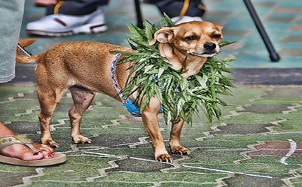 Pot Patch for Pups