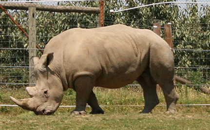 UK Deal To Prevent Rhino Extinction
