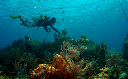 Success! No Seaport in the Cayman Islands' Half Moon Bay