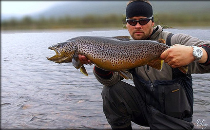 Yellowstone Officials Attempt Mass Killing of Lake Trout