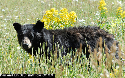 New York Governor Signs Bear Protection Legislation Into Law