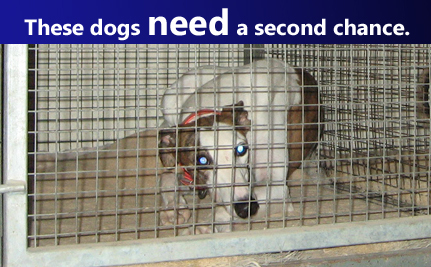 These Dogs Need a Second Chance