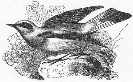 New Bird Species Discovered in Hawaii