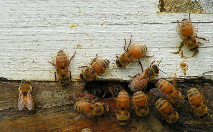 Teaching Beekeeping to Children Improves Behavior