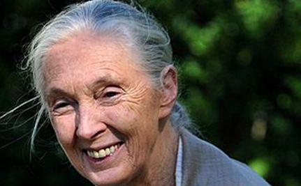 Meet Jane Goodall!