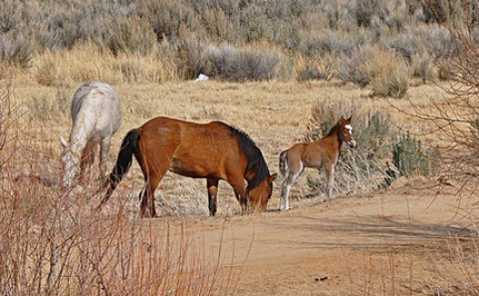 Days Left to Help Save Wyoming's Wild Horses