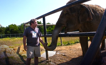 Rosie the Elephant Needs Rescuing