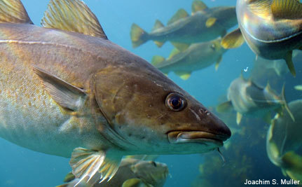 New England�s First Year of Fishing Under Sectors