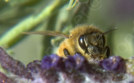 Are Pesticides The Reason So Many Bees Are Dying?