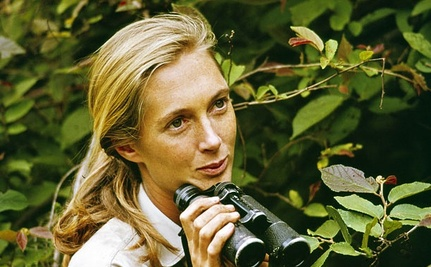 My Professor: Dr. Jane Goodall