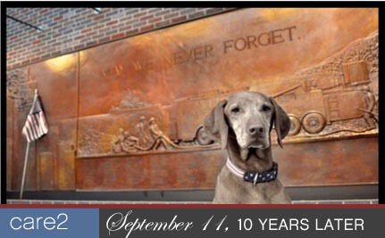 PAWtriotic Photos Honor Veterans on 9/11