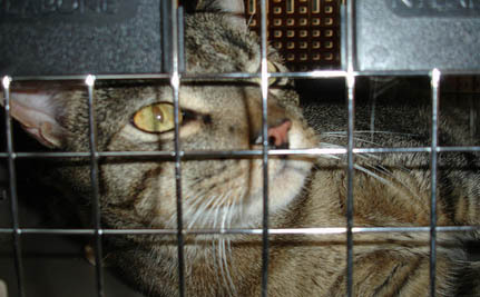 """Pet Hotel from Hell:"" Malaysian Activists Seek Jail Time for Cat Abusers"