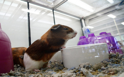 100 Animals Die In Petco Store After Flood