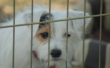 527 Dogs Seized From Quebec Puppy Mill
