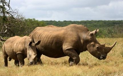 Make Every Day A Rhino Day
