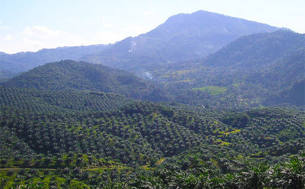 Palm Oil or Rainforests – You Decide