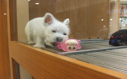 Toronto Bans Pet Stores From Puppy Mill Cats And Dogs Care2 Causes