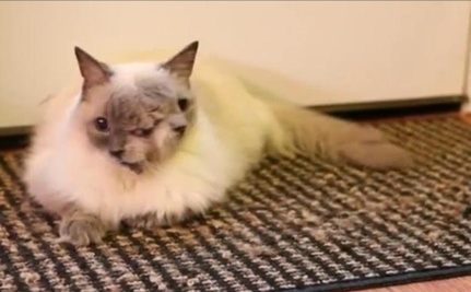 Two-Faced Cat Makes Guinness World Record